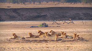 Cazadores de África: La manada adolescente