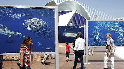 L'Informatiu - Comunitat Valenciana 2 - 26/05/17 - ver ahora