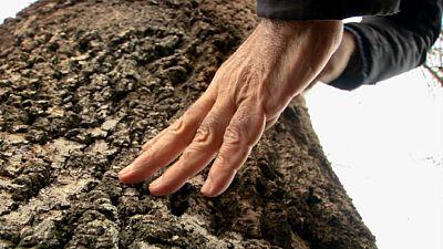 Fresno, árbol que nos ayuda