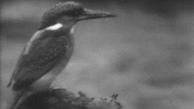El planeta azul - El martín pescador (I)