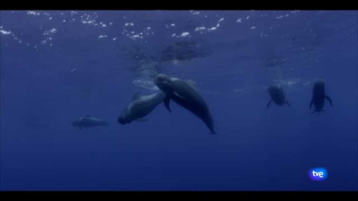 Documental Océanos