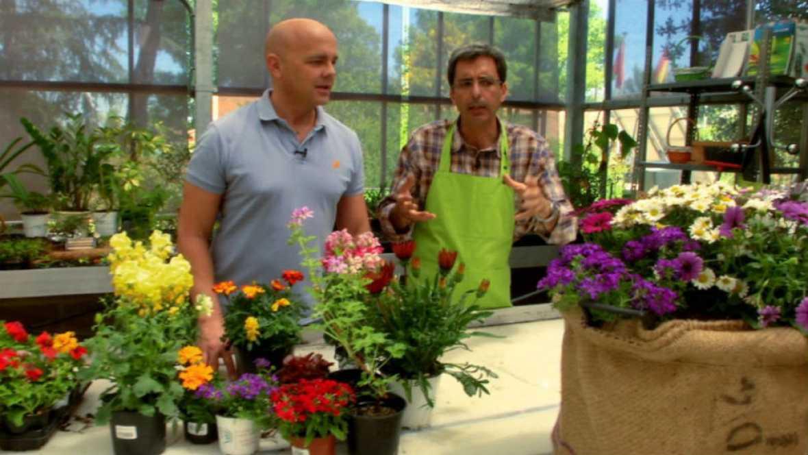 Trucos para cuidar plantas en verano
