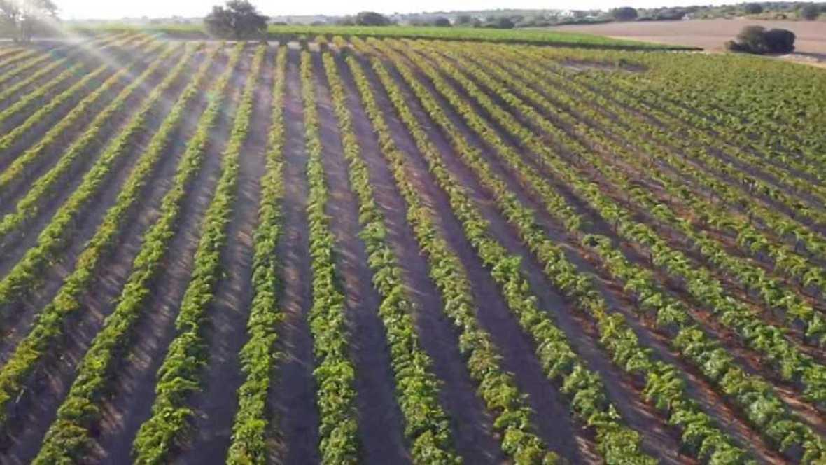 Agrosfera - 17/06/17 - ver ahora