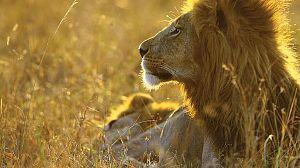 La manada: Monarcas en peligro