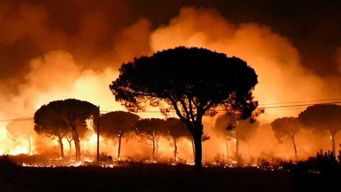Ha estado cerca, a menos de dos kilómetros, pero finalmente el fuego no ha alcanzado el centro de cría de El Acebuche. Los linces evacuados han vuelto a las instalaciones. 9 adultos y 5 crías, de 27 ejemplares. Los técnicos no tuvieron tiempo para po