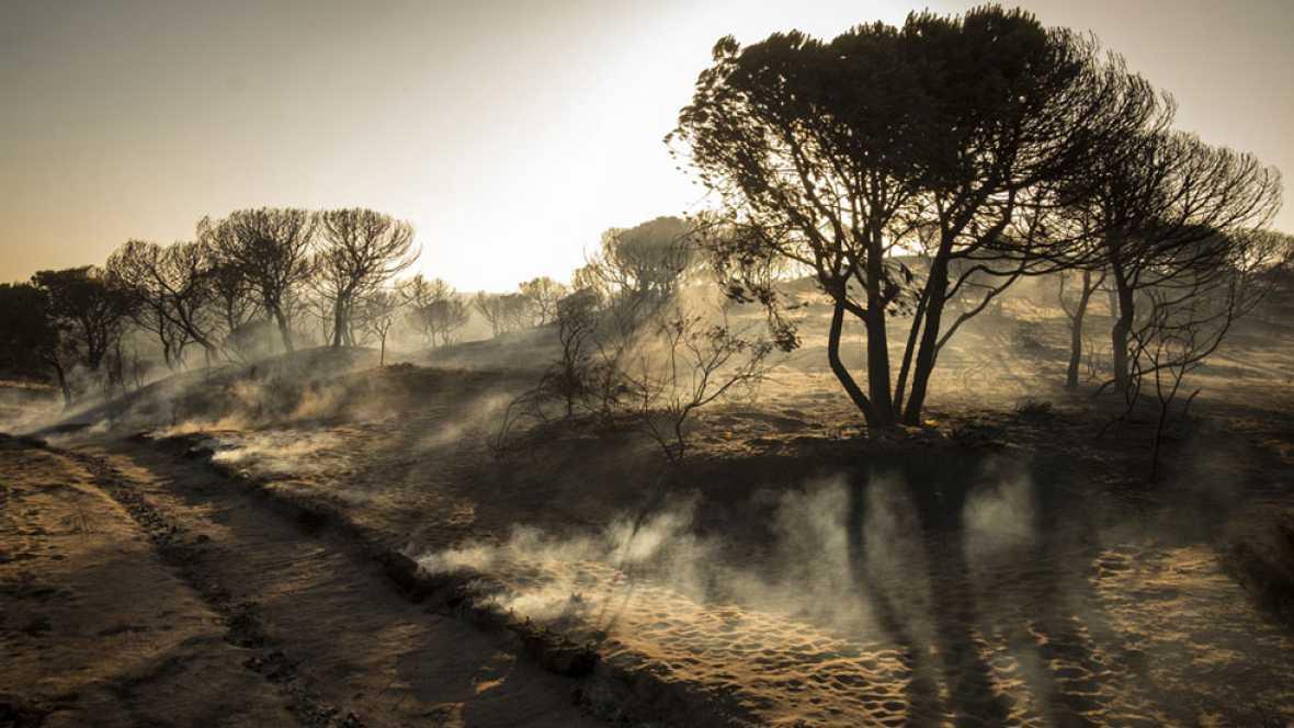 """Castellano: """"El fuego no ha llegado el Parque Nacional de Doñana"""""""