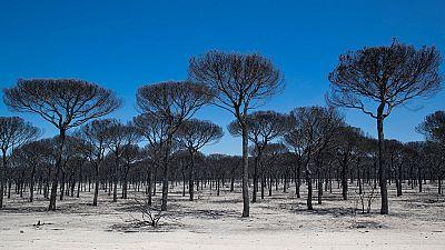 Controlado el incendio forestal en Doñana