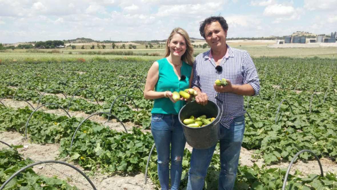 Pepino: fruto de verano