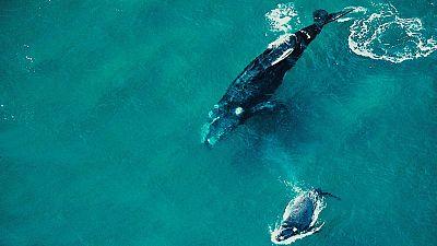 Grandes documentales - Secretos de la vida salvaje: Secretos del mundo acuático - ver ahora