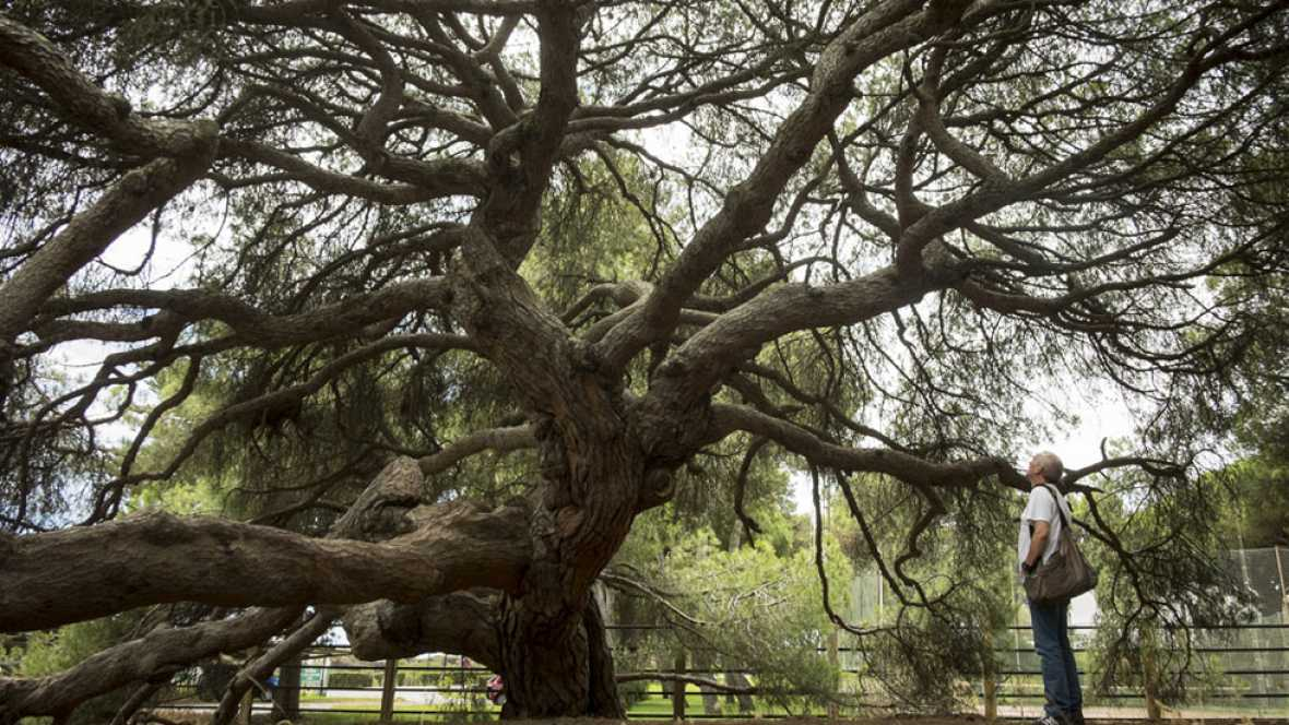 Doñana recupera la tranquilidad y el sector turístico piensa en sus negocios
