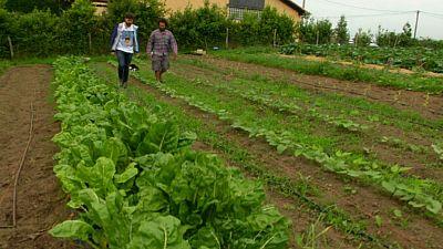 La esencia de Asturias en unas semillas