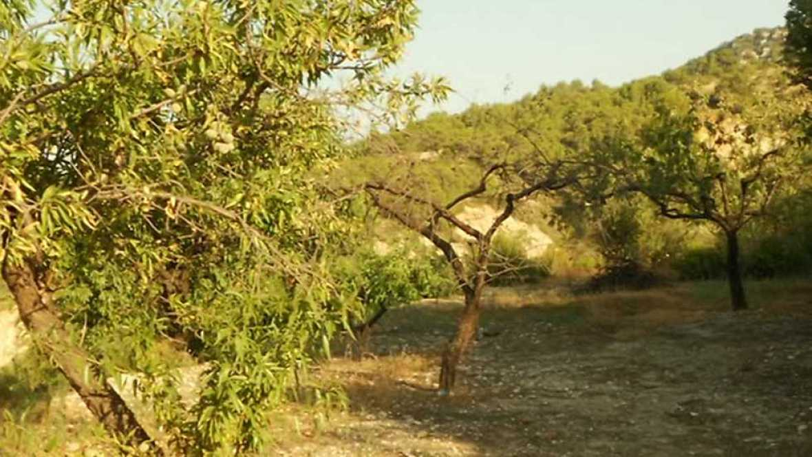 Agrosfera - 15/07/17 - ver ahora