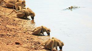 Relatos de Zambia: La tropa del río