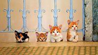 'Kedi' (Gatos de Estambul)