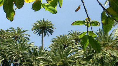 Senderos isleños - Ultimos palmeros