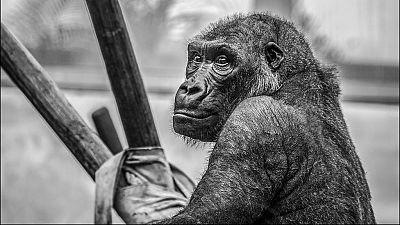 El zoo de Santillana del Mar cumple 40 años