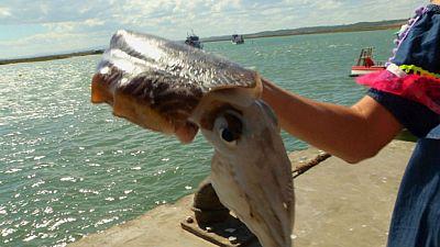 El camaleón del mar
