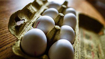 Inmovilizan 20 toneladas de huevo líquido contaminado