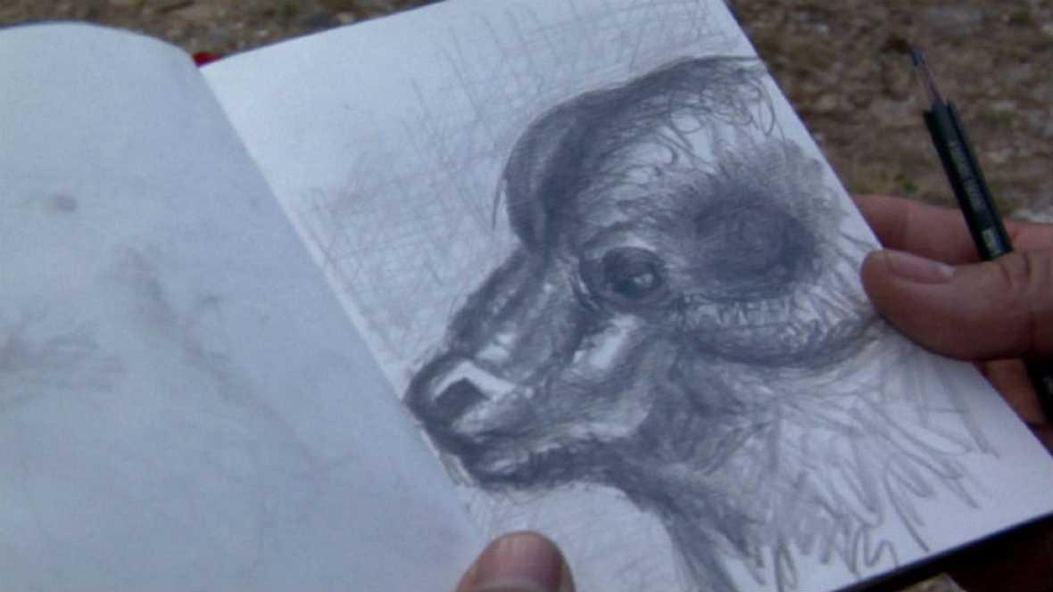 Muflón, el padre de las ovejas