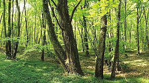 El bosque global