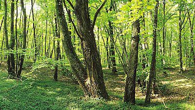 Grandes documentales - El bosque global - ver ahora