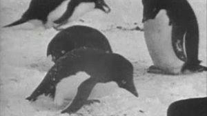 El mundo de los pingüinos (I)