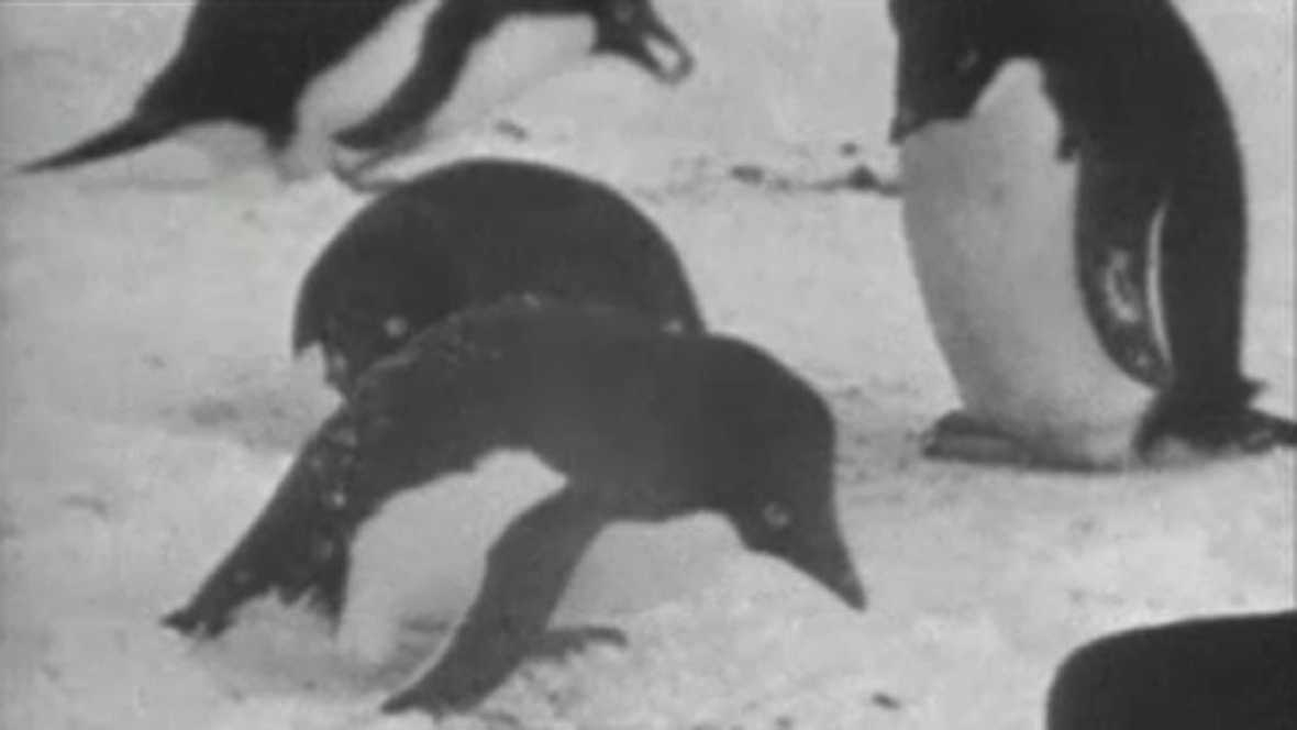 El planeta azul - El mundo de los pingüinos (I)