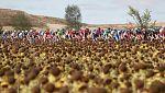 Vuelta Ciclista a España 2017 - 17ª etapa: Villadiego / Los Machucos- Monumento Vaca Pasiega (1)