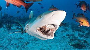 Peligro zona de tiburones