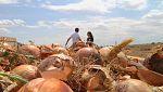 Aquí la tierra - Momento para recolectar cebollas