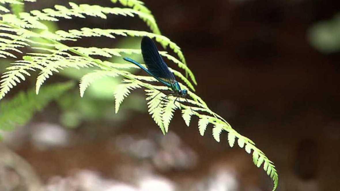 El escarabajo verde - La economía del fuego - ver ahora