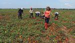 Aquí la tierra - Aprende a preparar fritada de tomate