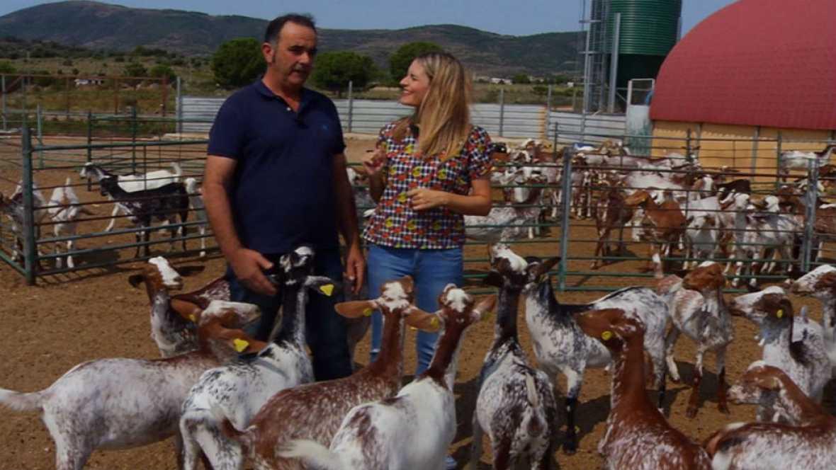 Conoce a las cabras floridas