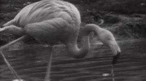 La reserva ornitológica