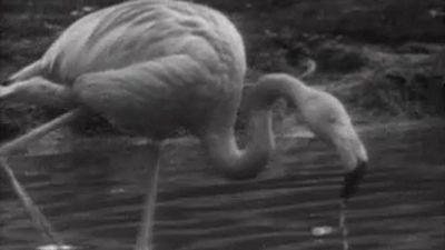 El planeta azul - La reserva ornitológica