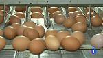 Comando Actualidad - Controles en las granjas aviarias