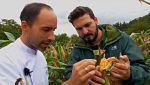 Aquí la tierra - Pan de maíz de txakinarto