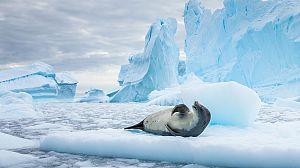 La Antártida salvaje
