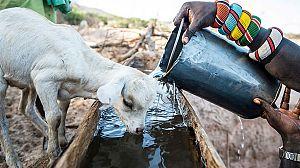 La Tierra. Un nuevo entorno natural: agua