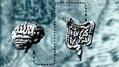Documenta2 - El vientre, nuestro segundo cerebro - ver ahora