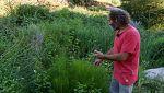 Aquí la tierra - Plantas con raíces en el agua