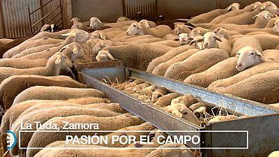 España Directo - 17/10/17 - ver ahora