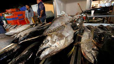 El comité científico de la Comisión Internacional para la conservación del atún atlántico evidencia la abundancia del stock de esta especie