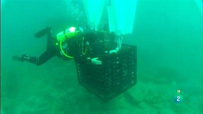 La Aventura del Saber. TVE. Bodega submarina. Crusoe Treasure