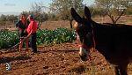 España Directo - 10/11/17