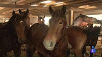 Comando Actualidad - Comidas sospechosas - Carne de caballo