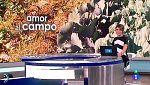 España Directo - 17/11/17