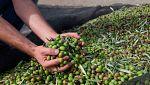 Estados Unidos anuncia un arancel a la aceituna negra española