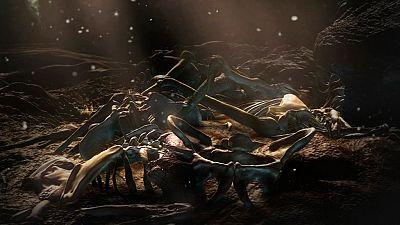 Documenta2 - La cuna de la humanidad - ver ahora