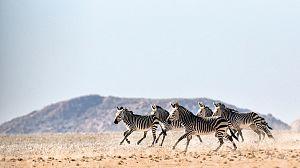 En el abrasador Kalahari